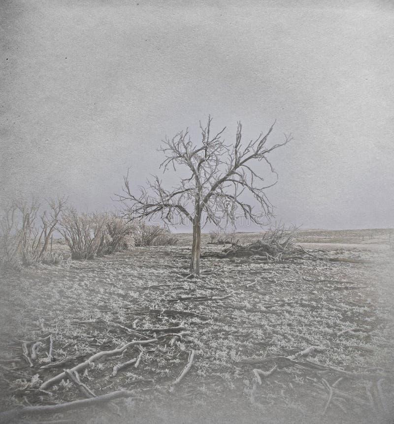 Frozen Tree in Horr Frost royalty free stock photo