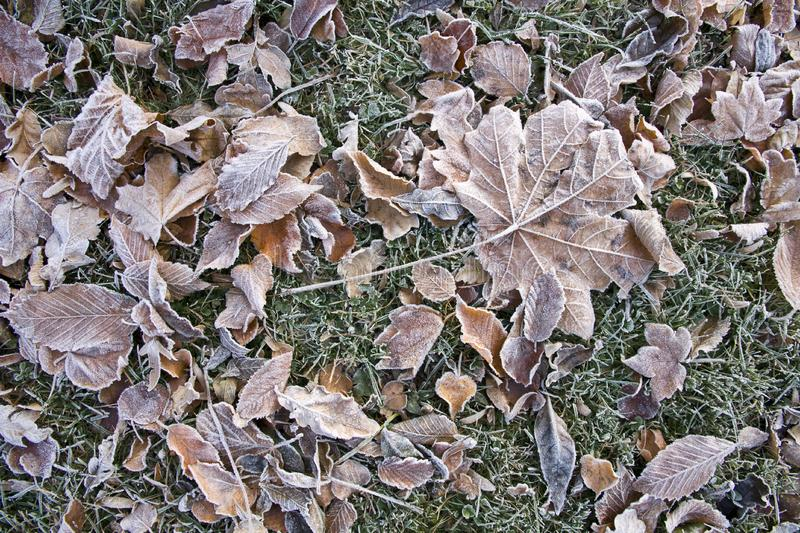 Frozen tree leaves on grass stock photos