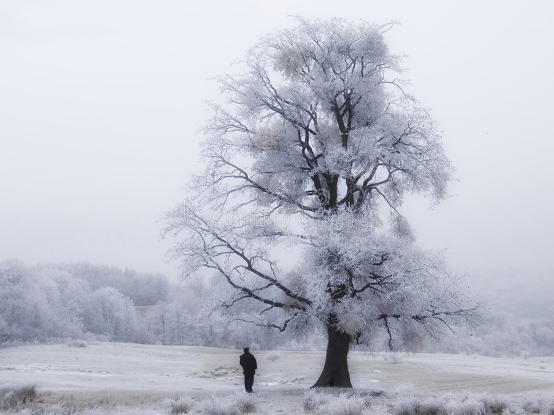 Download Frozen Tree With Man stock image. Image of haze, winter - 7950949