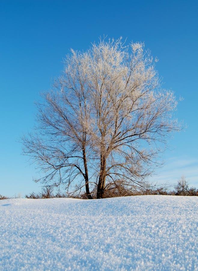 Frozen tree in snowy winter field under blue sky