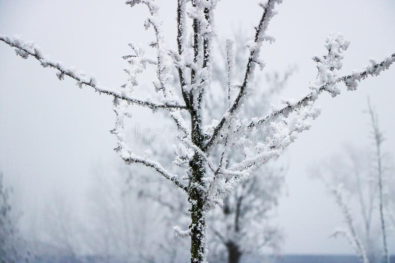 Frozen tree on the winter stock images