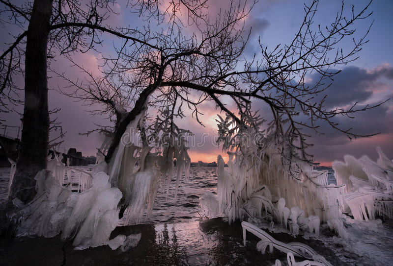 Frozen tree of winter storm. Extreme ice storm on the city's waterfront. Dniepropetrovsk of Ukraine royalty free stock image
