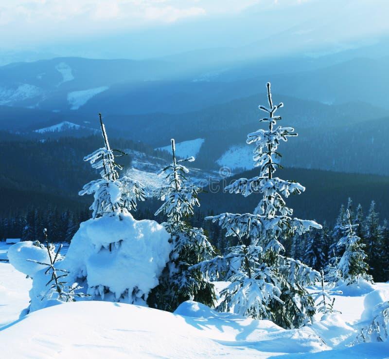 Frozen trees royalty free stock photos