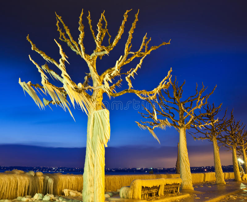Download Frozen trees stock image. Image of cool, froze, branches - 23224259