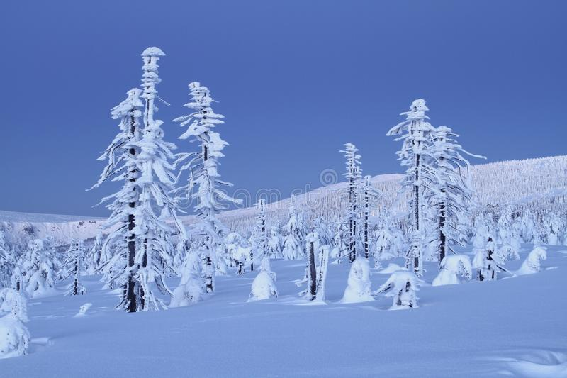 Download Frozen trees stock photo. Image of morning, frostbitten - 23396036