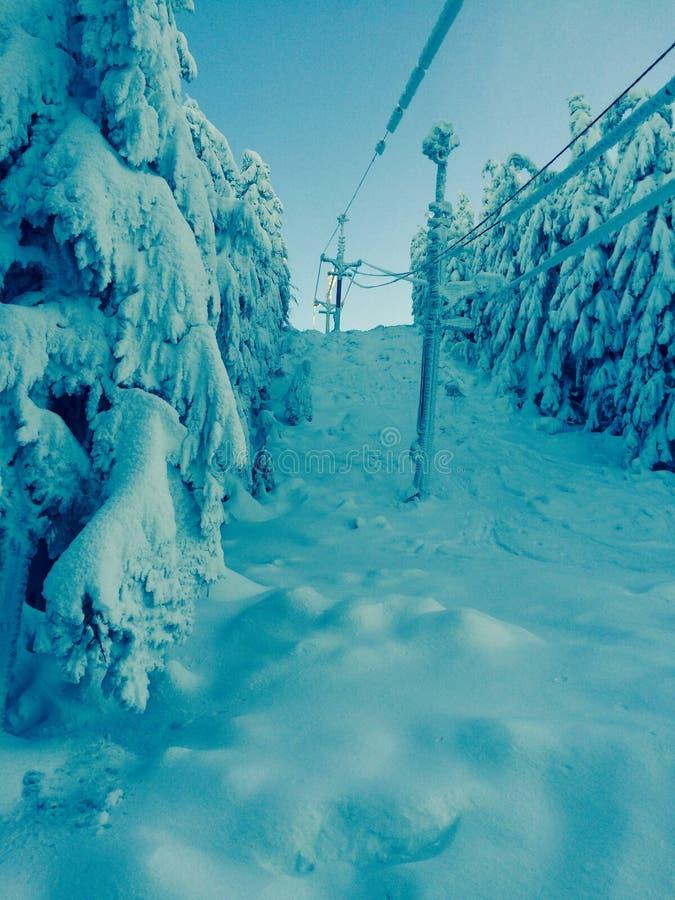 frozen trees στοκ εικόνες με δικαίωμα ελεύθερης χρήσης