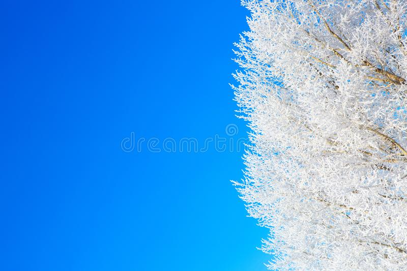 Frozen trees and branches . Beautiful white winter. Blue sky royalty free stock photo