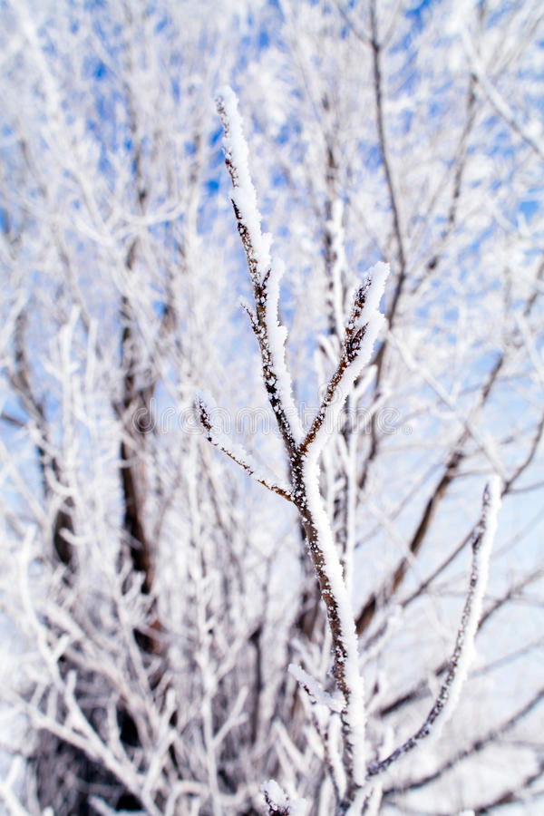 Frozen trees macro. Frozen trees branch macro background royalty free stock photography