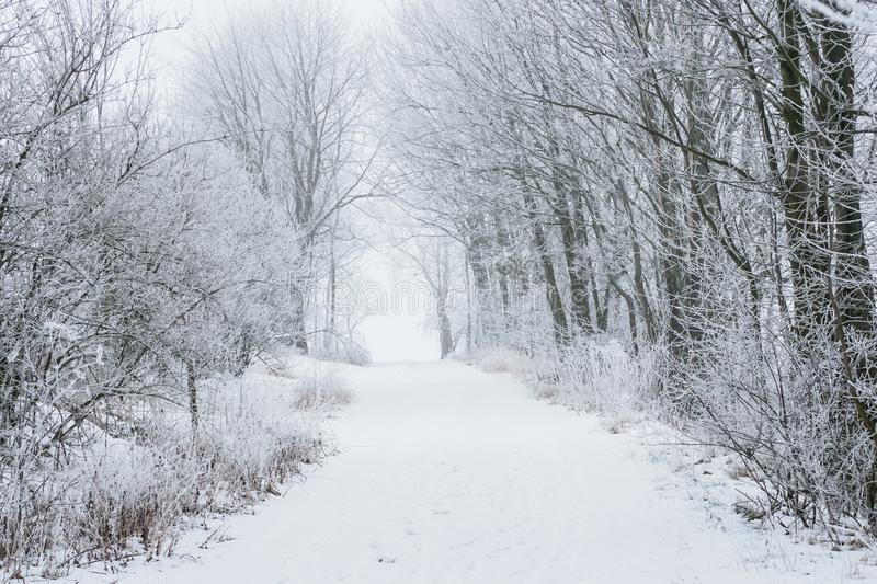 Frozen trees and path in the snow. stock image