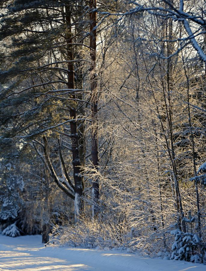 Frozen trees by a road royalty free stock photography