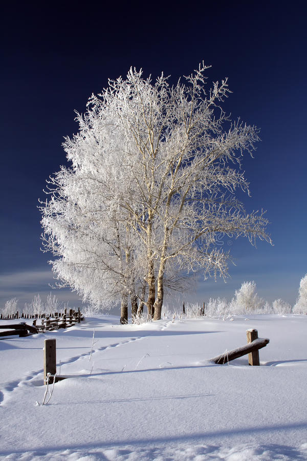 Frozen trees in winter royalty free stock image