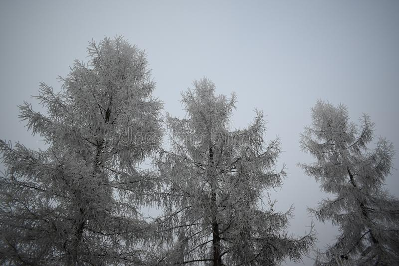 Icy trees. stock images