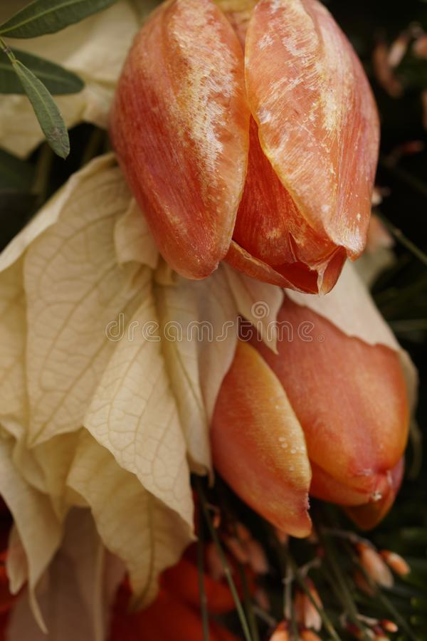 Macro on frozen tulips. Beautiful funeral arrangement royalty free stock photo