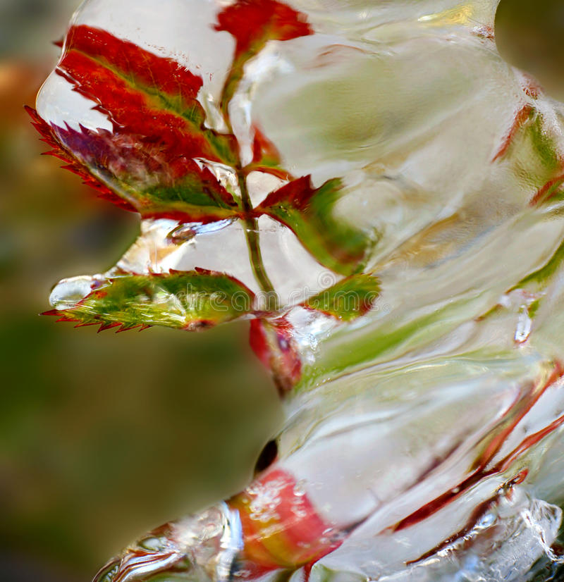 Download Frozen twig stock image. Image of freeze, white, nature - 37965353