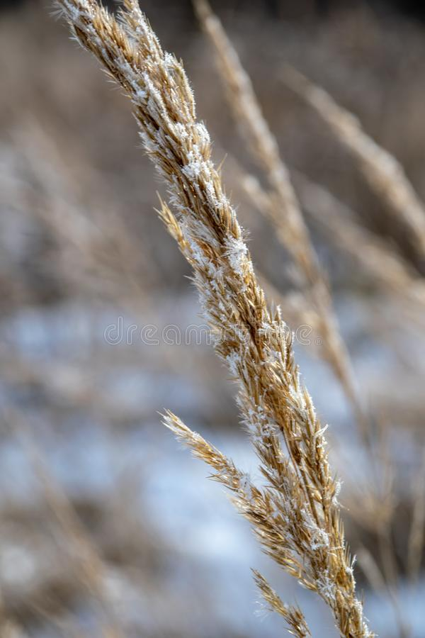 Frozen vegetation in winter on blur background. Texture fron leaves and branches in cold. abstract stock images