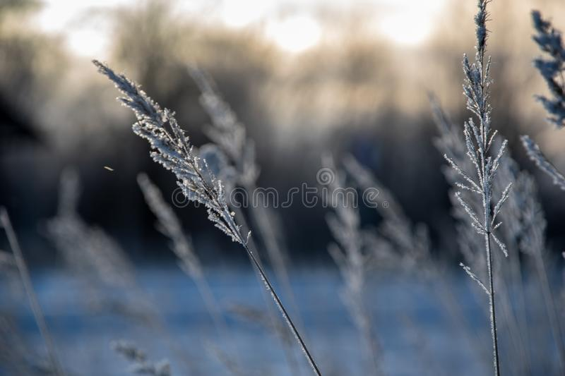 Frozen vegetation in winter on blur background. Texture fron leaves and branches in cold. abstract stock photography