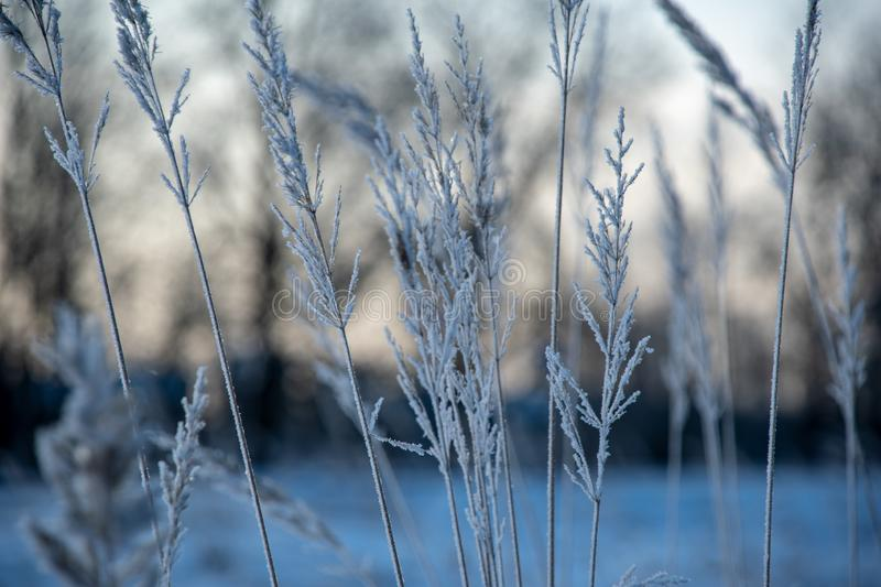 Frozen vegetation in winter on blur background. Texture fron leaves and branches in cold. abstract stock photos