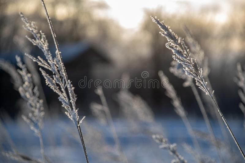 Frozen vegetation in winter on blur background. Texture fron leaves and branches in cold. abstract stock image