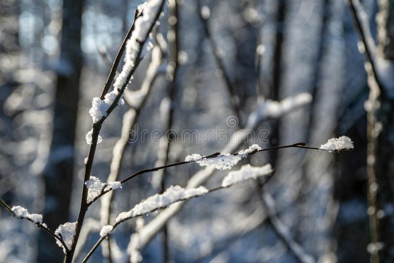 Frozen vegetation in winter on blur background. Texture fron leaves and branches in cold. abstract royalty free stock image