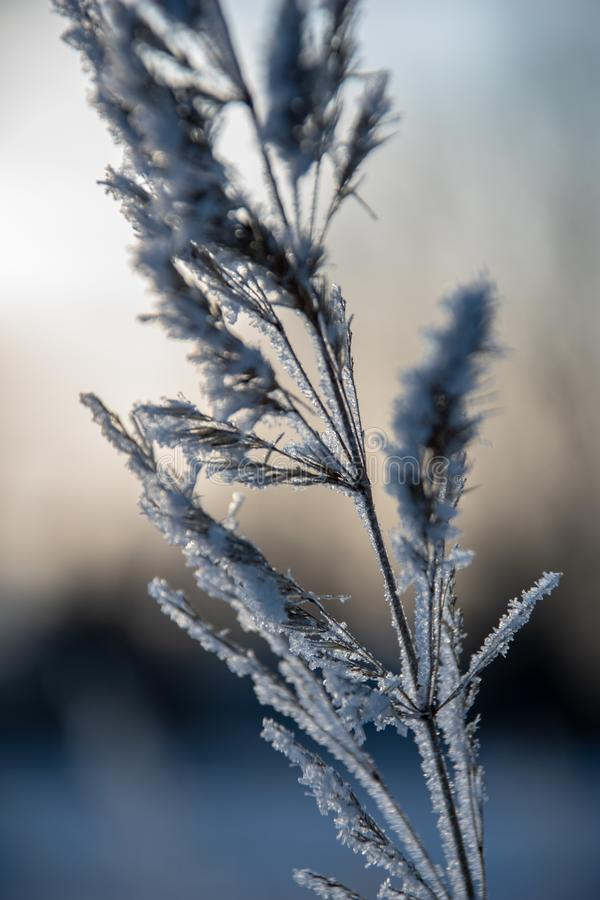 Frozen vegetation in winter on blur background. Texture fron leaves and branches in cold. abstract stock photo