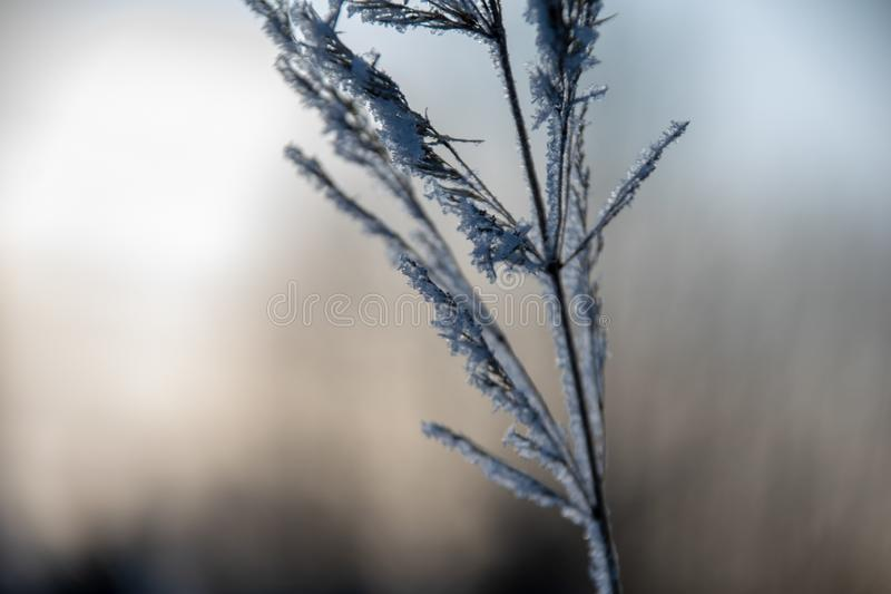Frozen vegetation in winter on blur background. Texture fron leaves and branches in cold. abstract royalty free stock photography