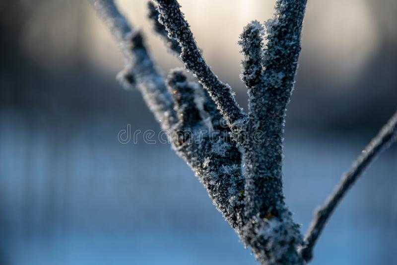 Frozen vegetation in winter on blur background. Texture fron leaves and branches in cold. abstract royalty free stock images