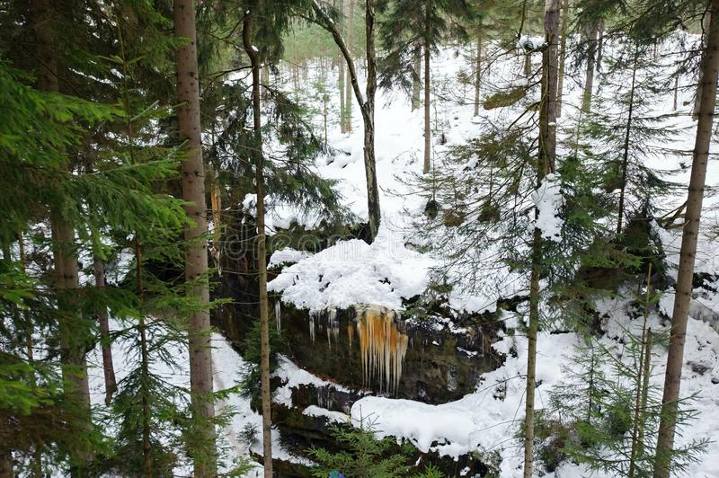 Frozen waterfalls and snow in forest royalty free stock image