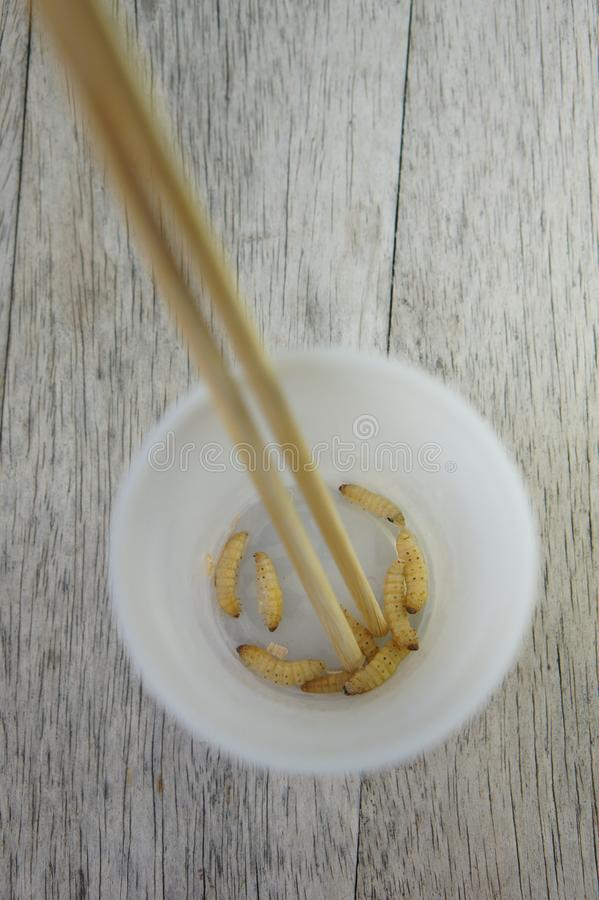 Waxworms in a cup stock photography