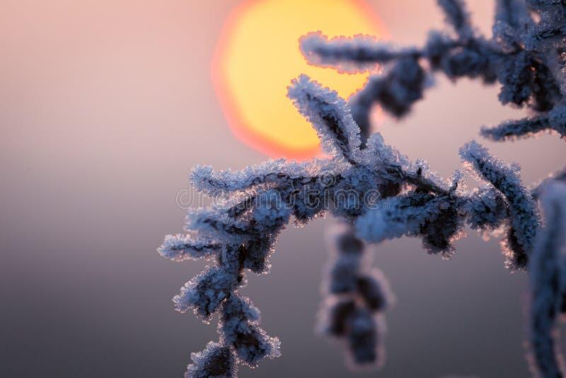 Frozen winter stock images