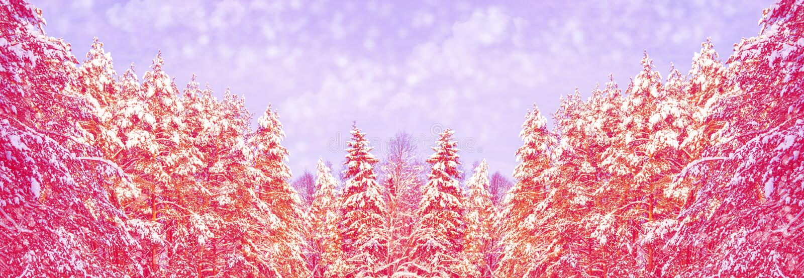 Winter forest with snow covered trees. Frozen winter forest with snow covered trees royalty free stock photos