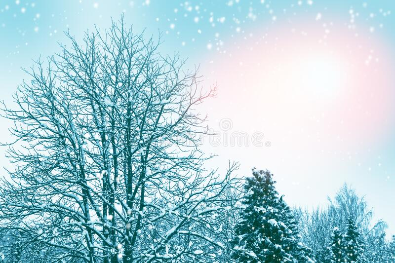 Winter forest with snow covered trees. Frozen winter forest with snow covered trees. outdoor stock images