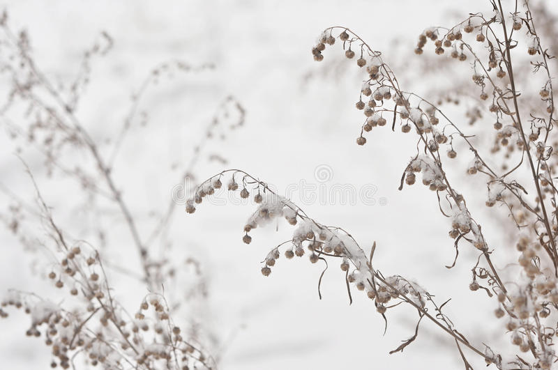 Frozen Winter Plant Royalty Free Stock Image