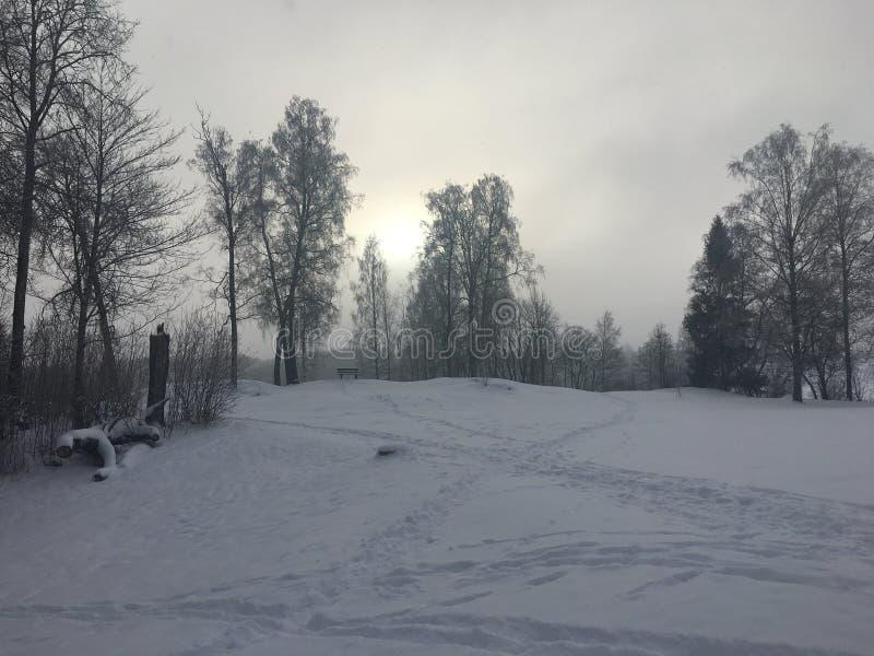 Frozty winterday стоковая фотография
