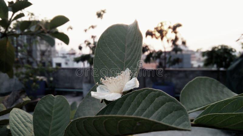 Frucht-Blume stockfoto