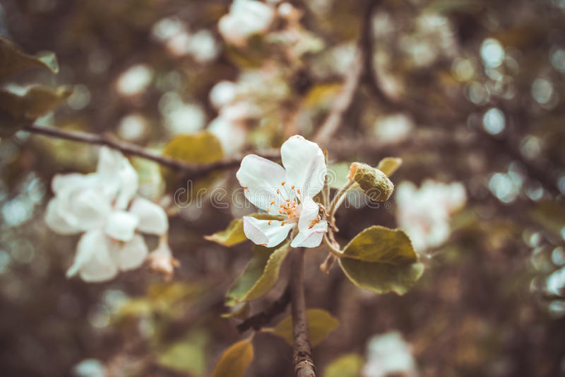 Frucht-Blume stockfotografie