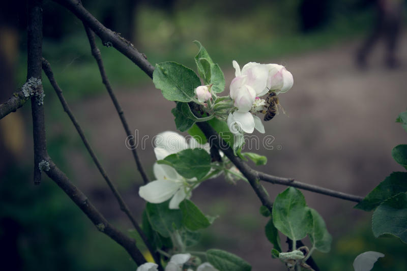 Frucht-Blume lizenzfreie stockbilder