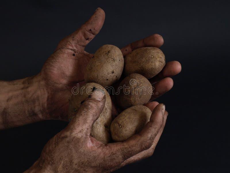 Frucht der Erde lizenzfreies stockbild