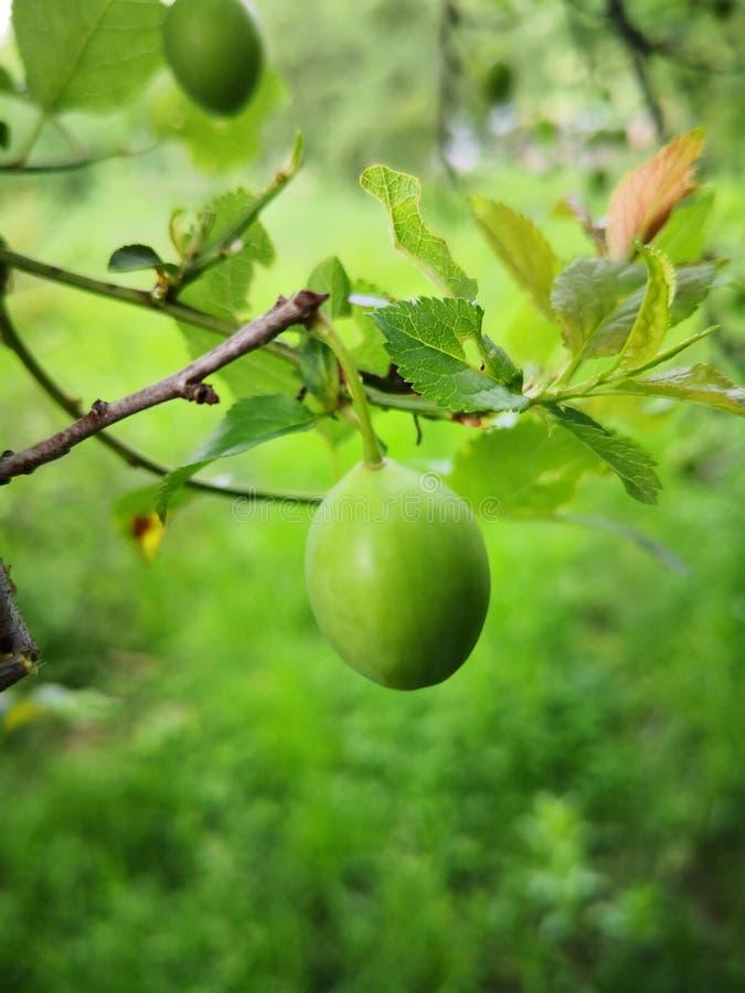 Frucht der Natur im Frühjahr lizenzfreies stockbild