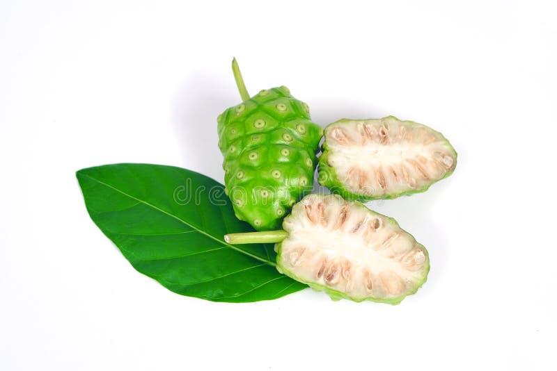 Frucht Noni oder Morinda Citrifolia lokalisiert auf weißem Hintergrundkrautkonzept lizenzfreies stockbild