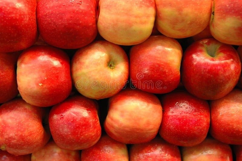 Frucht-Serie lizenzfreie stockbilder