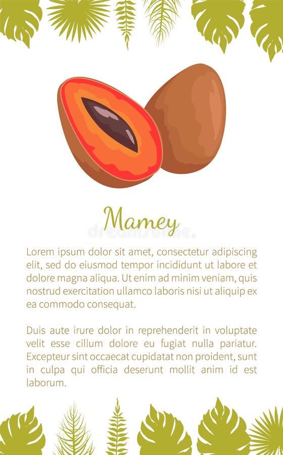 Frucht-Vektor-Plakat-Text-Blätter Mamey exotische saftige lizenzfreie abbildung
