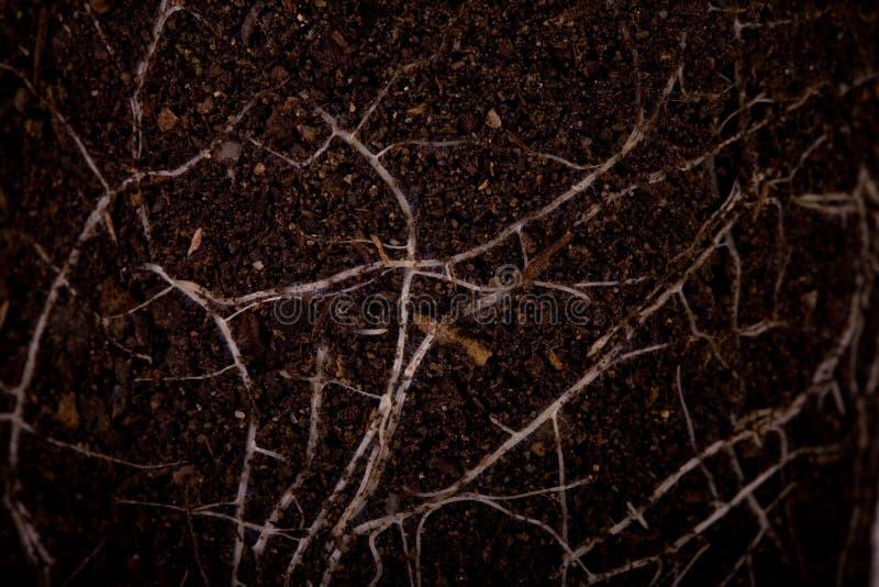 Fruchtbarer Boden mit Wurzeln stockbild