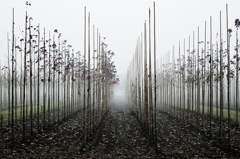 Fruchtgarten während des Nebels stockbilder
