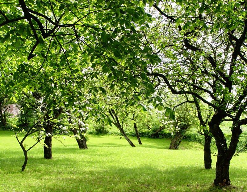 Fruchtobstgarten Stockbild