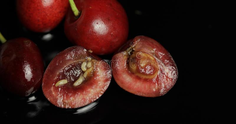 Fruchtwürmer in der faulen Kirsche, schwarzer Hintergrund Larve von Kirschfliegen nahaufnahme lizenzfreies stockfoto