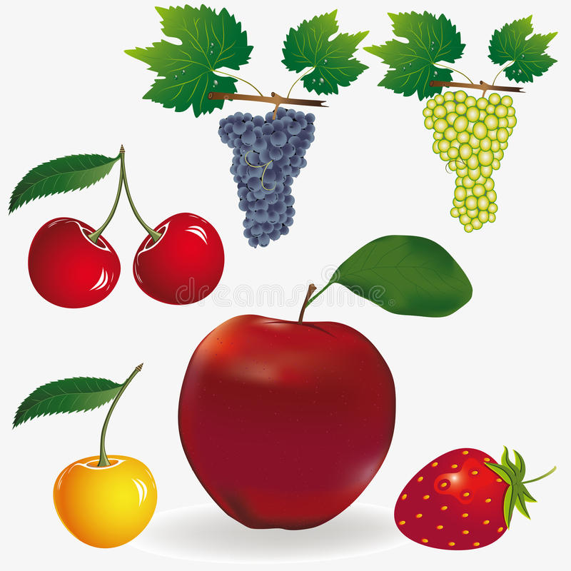 Fruit vector illustratie
