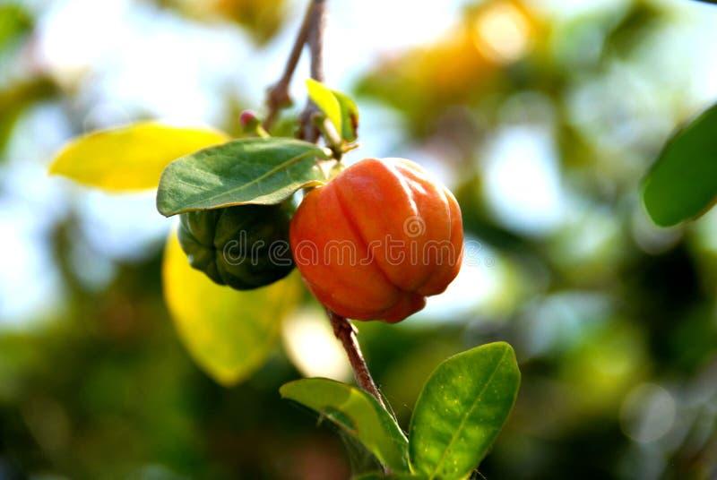Download Fruit stock afbeelding. Afbeelding bestaande uit rood - 39117953