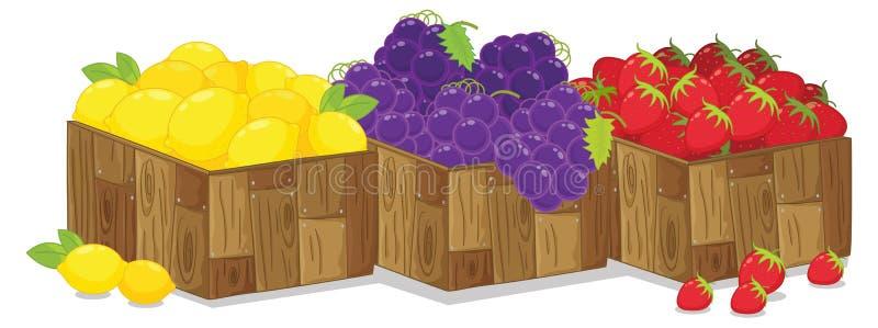 Fruit illustration de vecteur