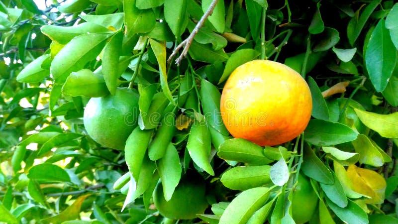 fruit royalty-vrije stock afbeeldingen
