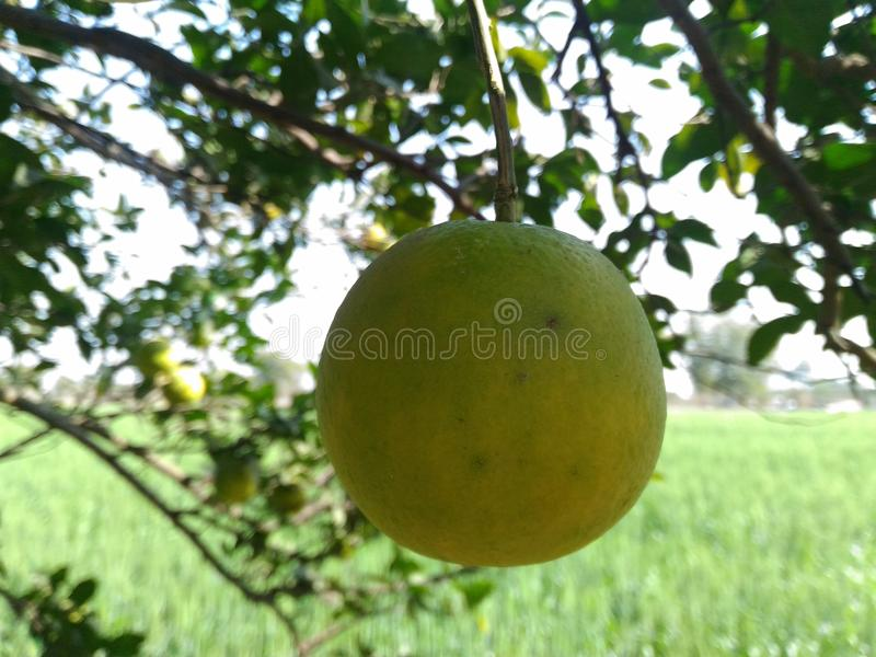 fruit royalty-vrije stock fotografie